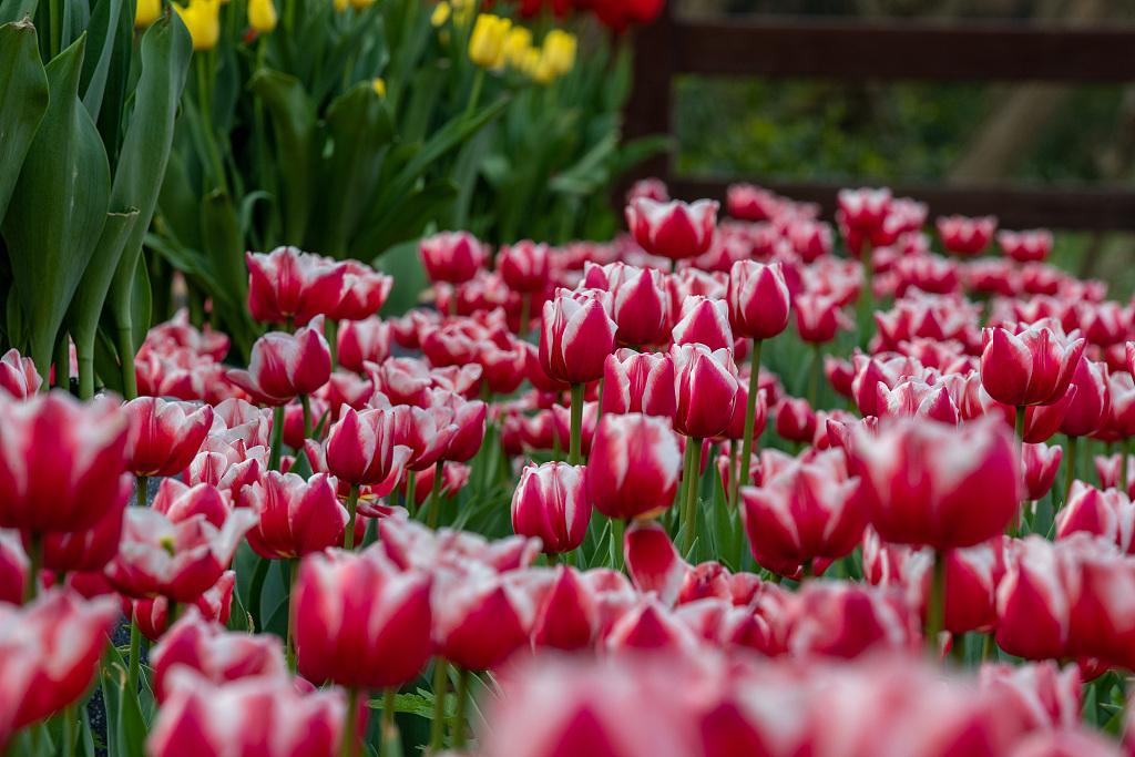 春暖中国百花开 花瓣摇曳邀游人赴约