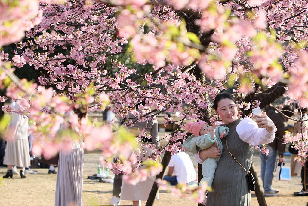 日本东京樱花肆意绽放 民众纷纷树下打卡