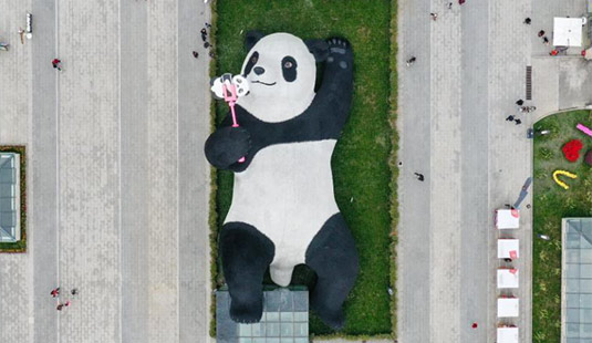 """四川都江堰:""""熊猫之都""""迎新宠"""