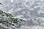 峨眉山金顶迎四月春雪
