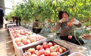 驻马店市驿城区打造特色种植业助力乡村振兴