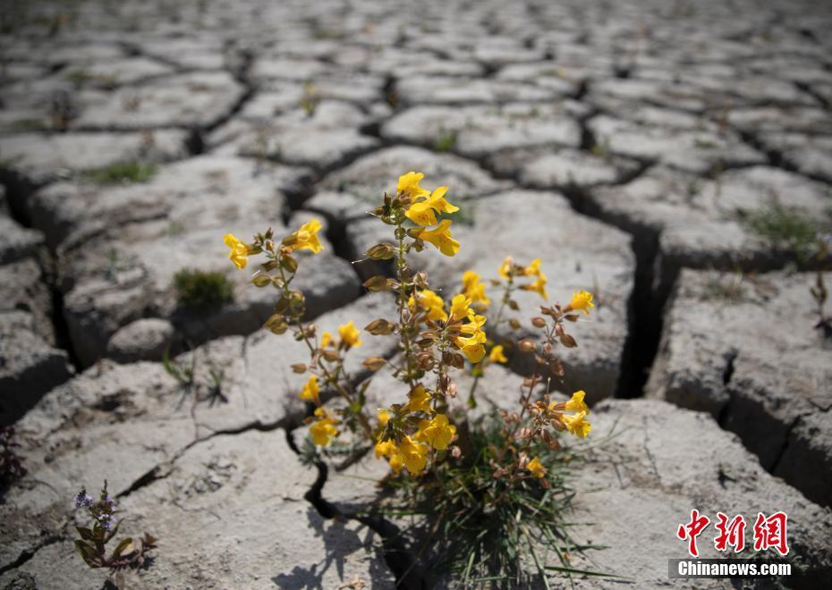 美国西部大片区域遭遇大旱