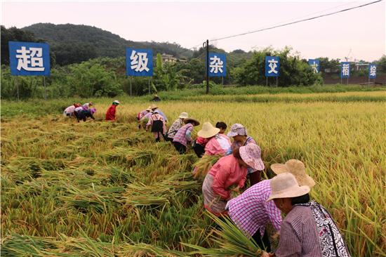 """云南河口:""""区县""""农业经济发展呈现新格局"""