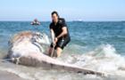 14米长鲸鱼搁浅海岸