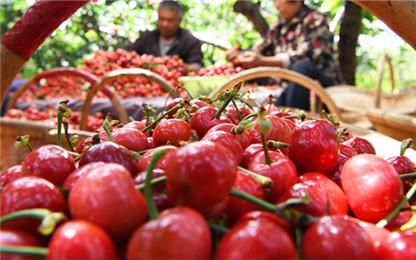 今夏法国水果价格大幅上涨 樱桃贵了20%