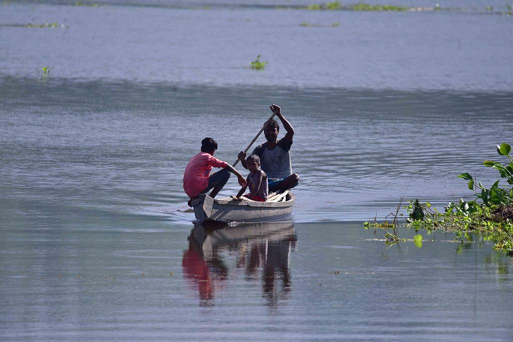 印度当地暴发洪水 水牛高地躲避