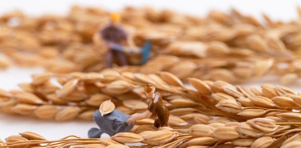 世界粮食计划署驻华代表:中国为粮食安全作出极大贡献