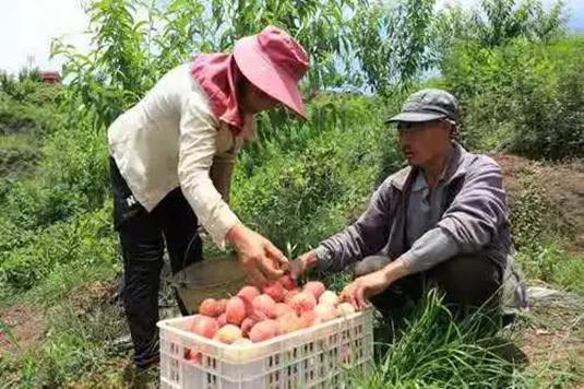 本地特色农产品-供图-峨边县委宣传部.jpg