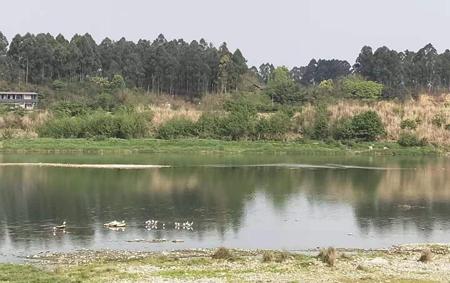 彭山河长制图片1.png