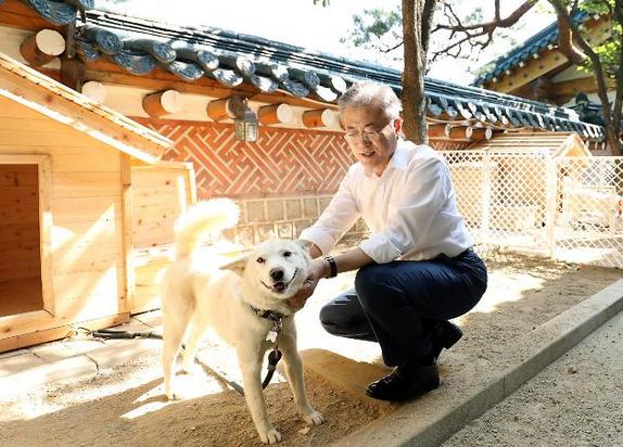 文在寅与朝鲜丰山犬玩耍