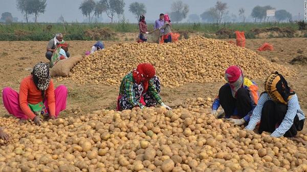 190425160702-lays-india-potato-farmers-super-169.jpg