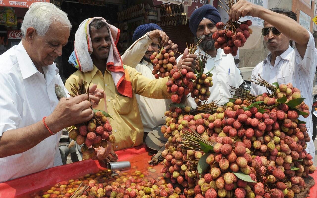 印度十日内31名儿童因脑炎丧生 都吃了这种水果