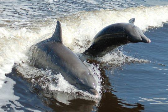 超260只海豚搁浅墨西哥湾(图源:今日美国网)