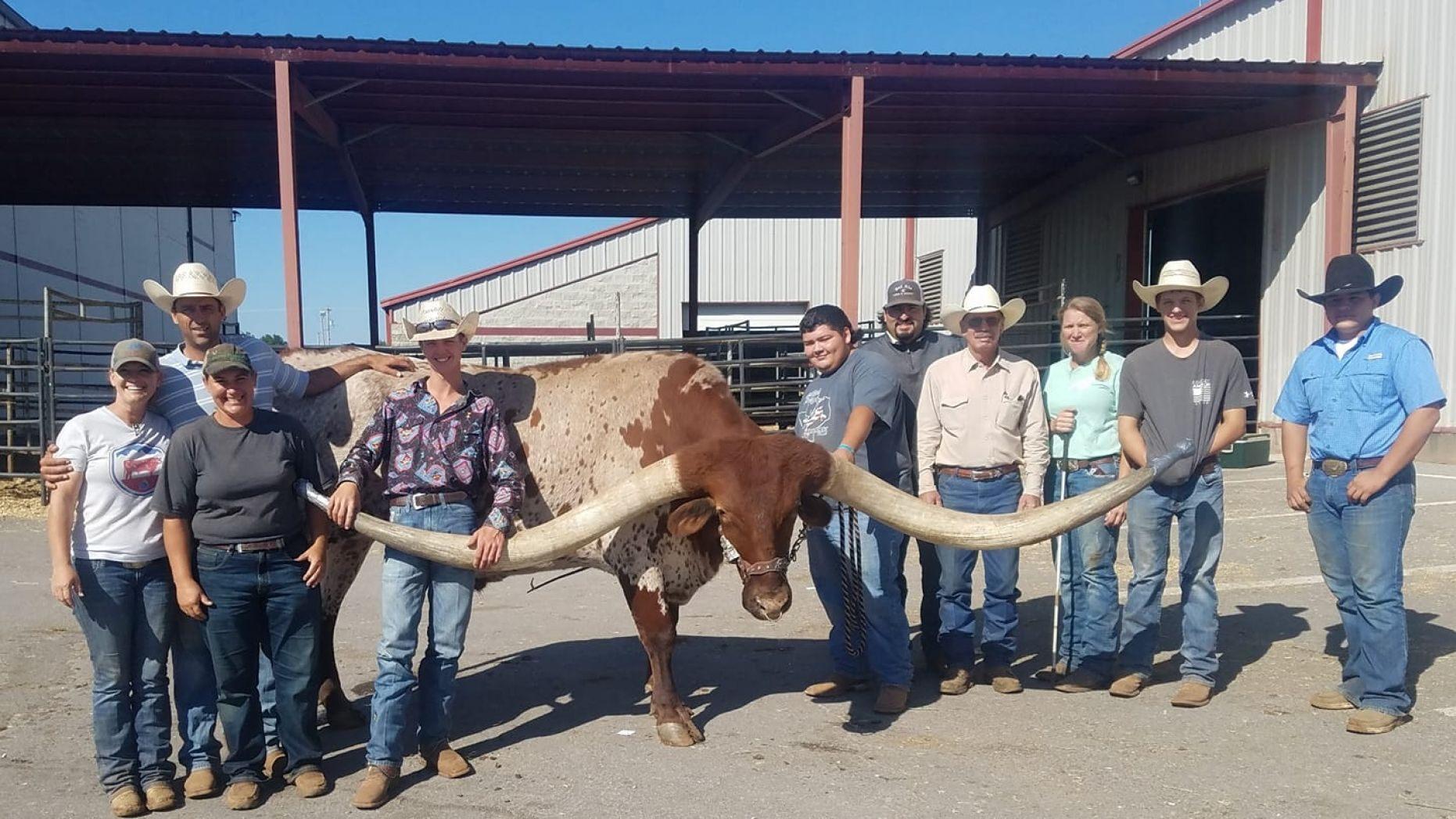两角间距达3米多 美国一长角公牛或破世界纪录!