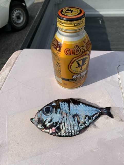 日本渔民捕获谜之深海鱼:可怕又美丽 越看越入迷(图)