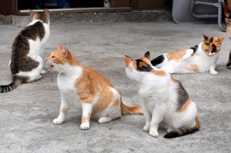 """日本""""猫岛""""60多只猫意外死亡 八旬老人涉嫌投毒被起诉"""
