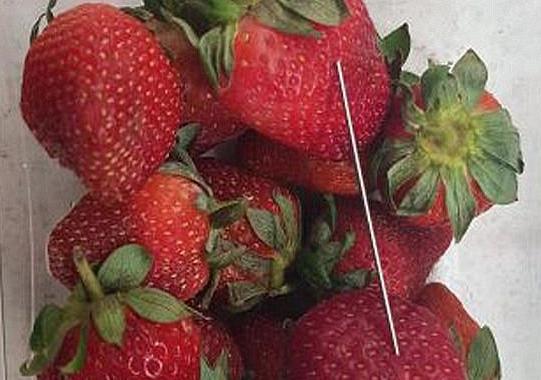 澳大利亚再现食物藏针事件:水果和面包中找到针和图钉