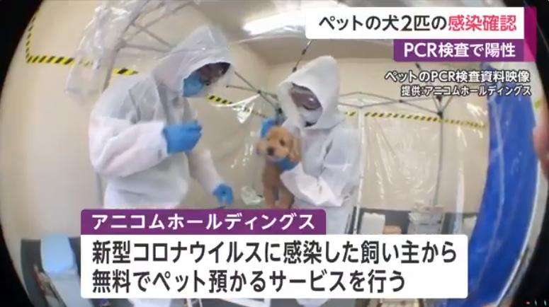 宠物犬正在接受检测(富士电视台)