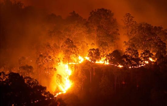 加州山火蔓延 当地最古老国家公园遭灾难性破坏