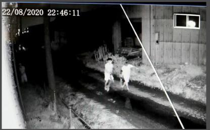 """日本多地发生家畜被盗案:数百头牛、猪消失 警方感叹""""闻所未闻"""""""