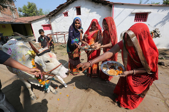 """印度正用牛粪牛尿等研发药物 声称""""包治百病"""""""