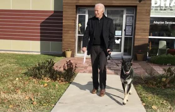 拜登与宠物狗玩耍时扭伤脚踝 医生公布X光片结果
