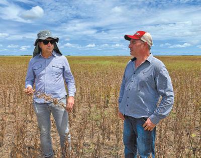 巴西阿马帕州的农场经营人员正在查看农田的大豆产量情况。本报记者 李晓骁摄