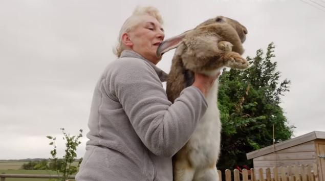 世界最大兔子家中被偷 主人急了:悬赏9000元 求找回!