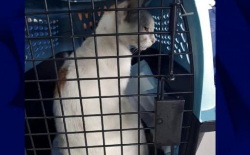 巴拿马一只白猫向监狱运毒:脖子上挂小袋子 被当场抓获