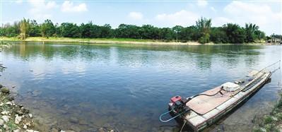九洲江水清澈见底。蓝钢铮摄