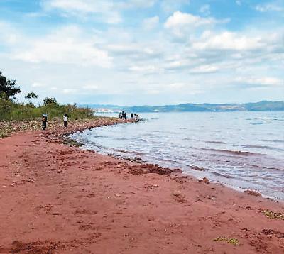 图为沙滩实景。图片来自网络